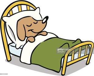 sleeping bed dog cute illustration vector animal istock print