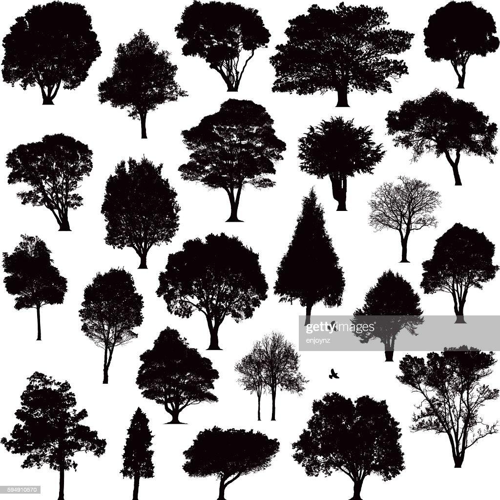 60 top tree stock