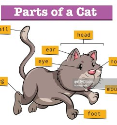 diagram showing parts of cat stock illustration [ 1024 x 899 Pixel ]