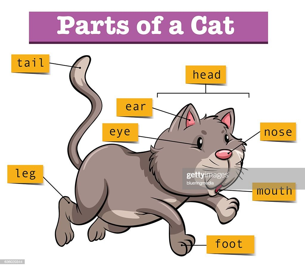 hight resolution of diagram showing parts of cat stock illustration