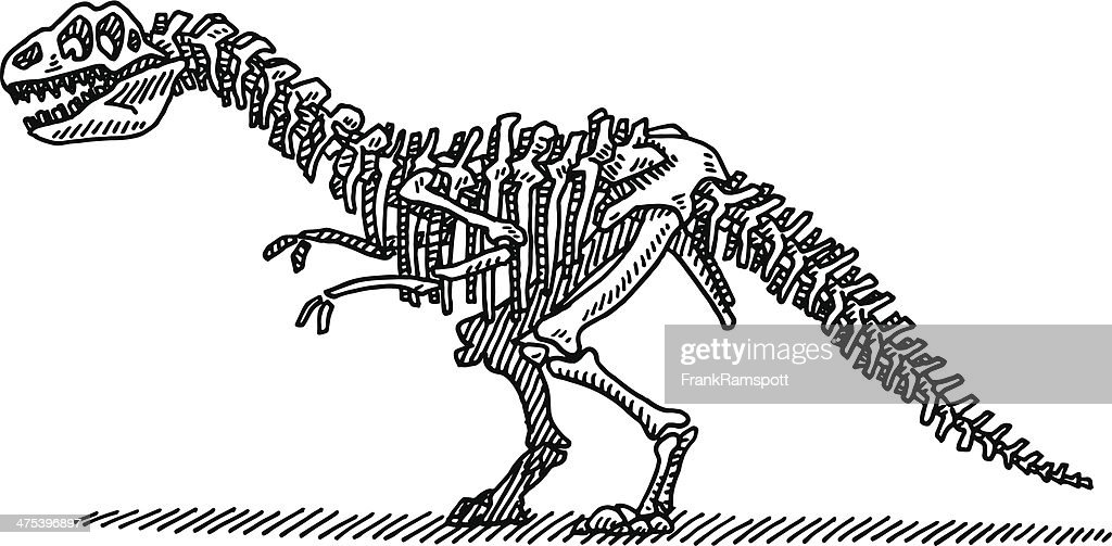 Dinosaur Bones Drawing Vector Art Getty Images