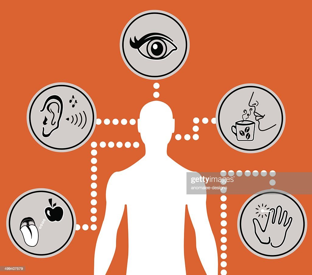 five senses diagram 2006 scion xb wiring icons vector art thinkstock