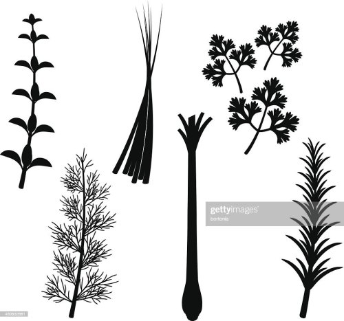 small resolution of herb silhouette set