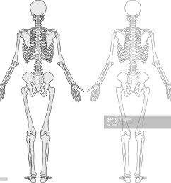 human body skeleton [ 1024 x 1001 Pixel ]