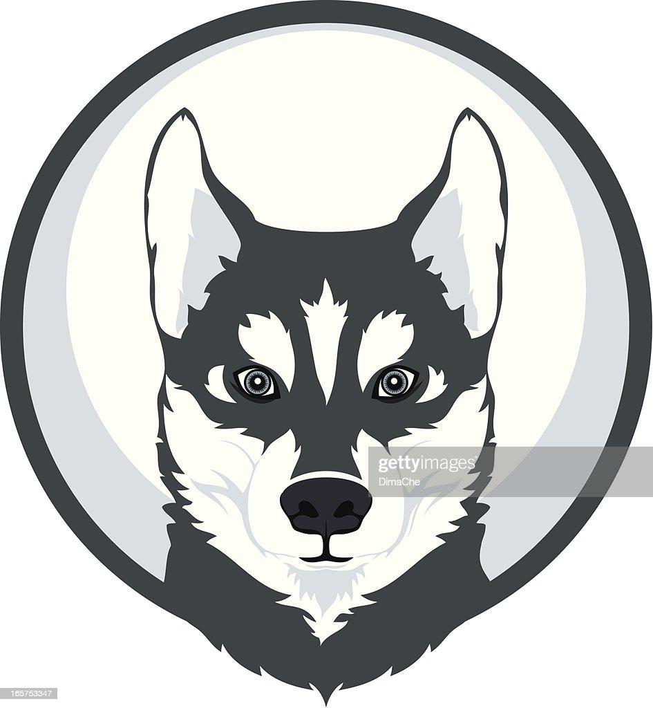 hight resolution of husky mascot