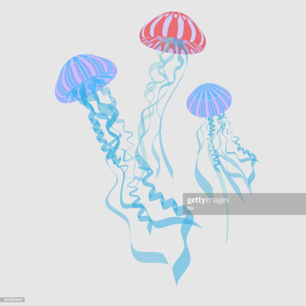 medium resolution of illustration of jellyfishes vector jellyfish