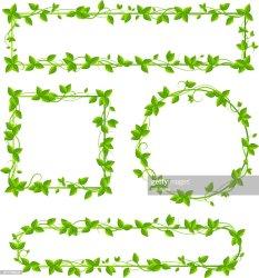 border leaf vector artist similar