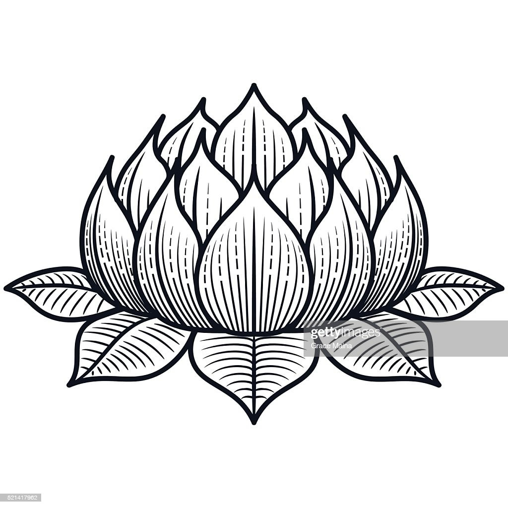 Where Can I Buy Lotus Flower