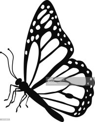 butterfly monarch vector side drawing clipart illustrations graphics illustration royalty gettyimages graphic getdrawings print