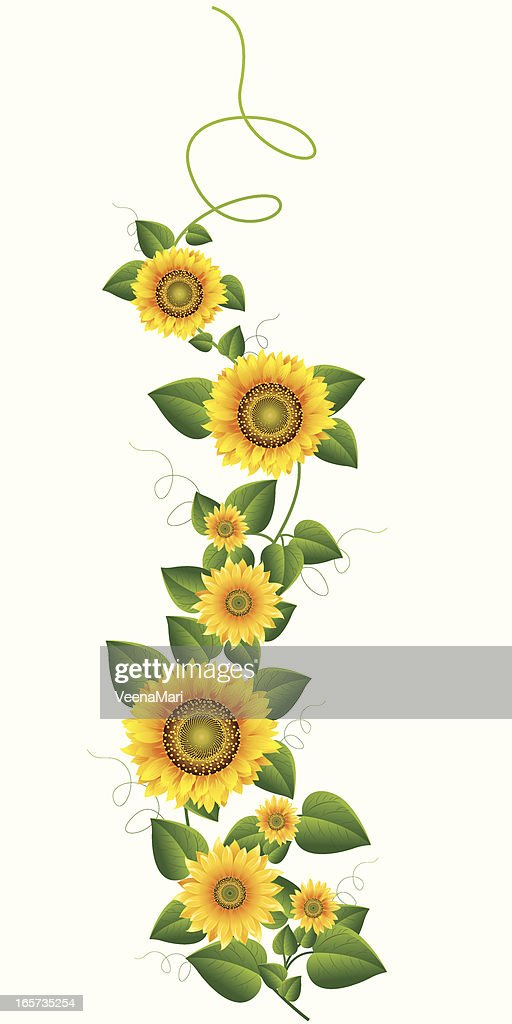 world's sunflower stock illustrations