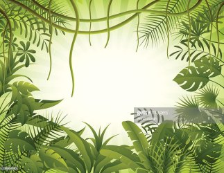Tropical Forest Background High Res Vector Graphic Getty Images