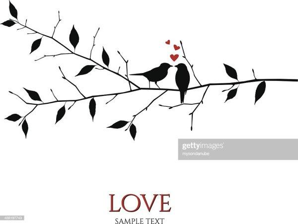 vector birds branch love