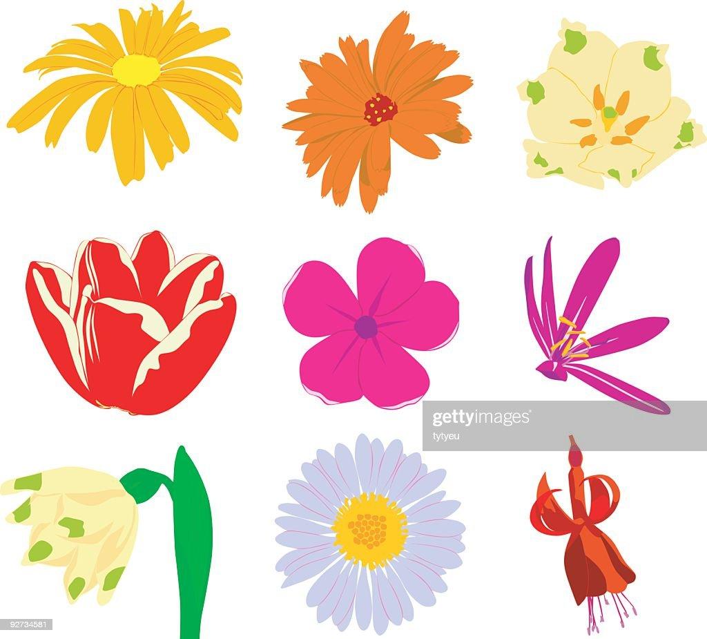 vector flowers 2 stock
