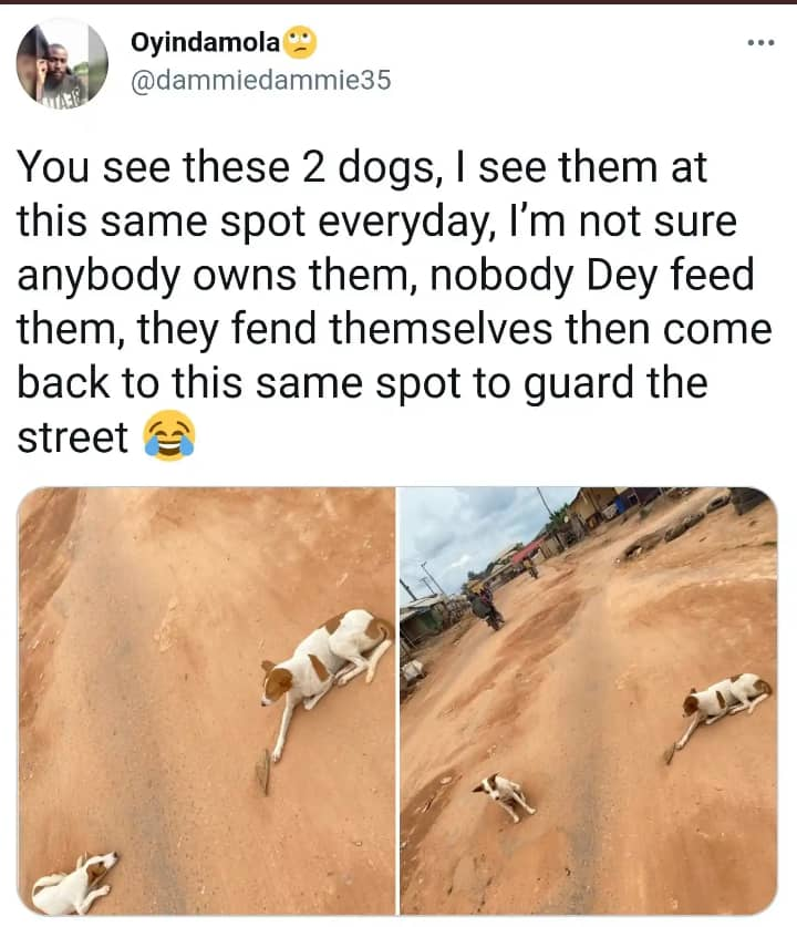 Man Narrates How Unknown Dogs Guard His Neighbourhood Daily