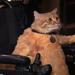 Wheelchair For Cats Leather Library Chair Cat Gif Find Share On Giphy