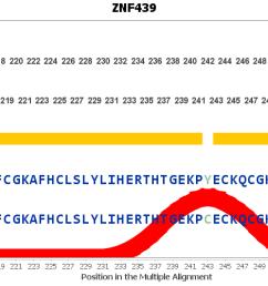 evolution for znf439 gene [ 8141 x 500 Pixel ]