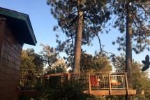 Tree House Julian CA