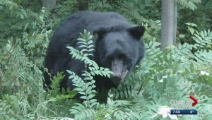 WildSafe BC: Wildlife and bear awareness refresher