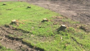 Mixed feelings about renovations at Moncton's Centennial Park