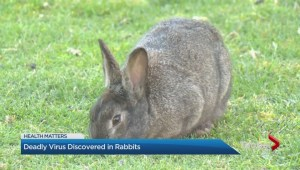 Deadly virus discovered in rabbits