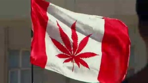PC government to table bill on pot legalization