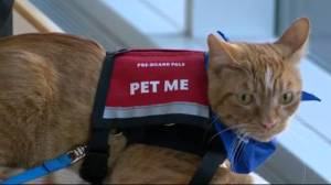 Calgary Airport offers purr-fect antidote to stress (01:54)