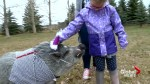 Pet pig and 6-year-old Calgary cancer patient team up at fundraising picnic