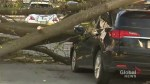 High winds in Toronto result in trees lining streets, damaged vehicles