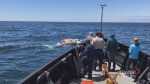 Fisheries minister announces changes to snow crab season, speed limits to protect right whales