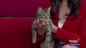 Calgary Animal Services Pet of the Week: Willow