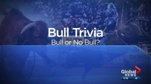 Our YEG At Night: Bull or no bull at PBR Global Cup