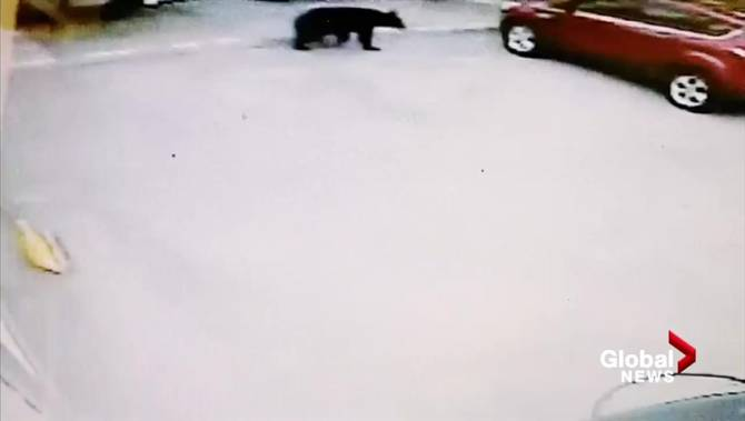 'I was surprised at the ease': Video catches bear opening B.C. woman's car door
