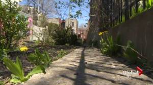 Push for safer alleyways