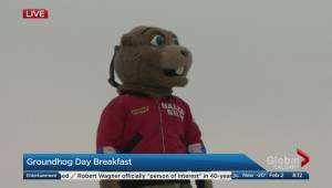 Alberta's Groundhog Day 2018: Balzac Billy predicts an early spring