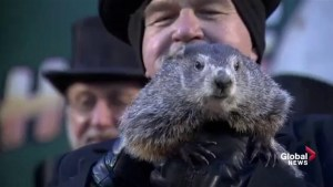 Groundhog Day: Punxsutawney Phil predicts 6 more weeks of winter