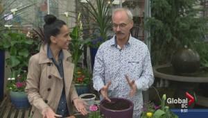 Gardening: Edible Easter Gift