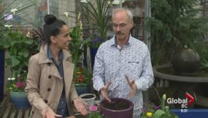 Gardening: Edible Easter Gift (05:01)