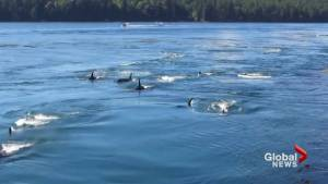 Whale watchers in line of fire after navy blasting