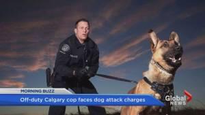 Calgary police dog attacks boy