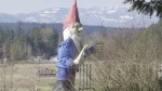 Howard's end?  Giant Vancouver Island gnome needs a new home