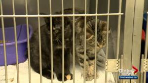 Calgary animal shelter issues plea as it hits capacity with stray cats and dogs