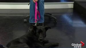 Edmonton Humane Society: Joule and Fallon