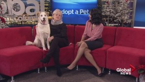Adopt a Pet: Jesse needs a new home