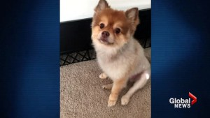 Dog found dead in carrier during Delta layover in Detroit