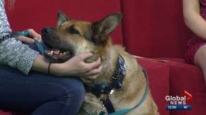 Calgary Humane Society Pet of the Week: Jenna