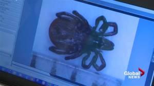 Mount Allison establishes Lyme disease research network