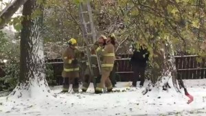 Calgary fire fighters and police try to coax bear out of tree