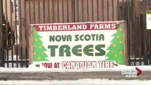East coast couple has been bringing Nova Scotia trees to Lethbridge for over 20 years