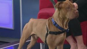 Adopt a Pet: Kingston