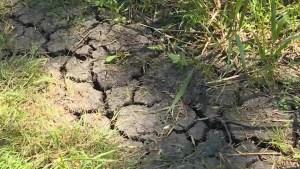 Cataraqui Region Conservation Authority issues Level 1 drought alert